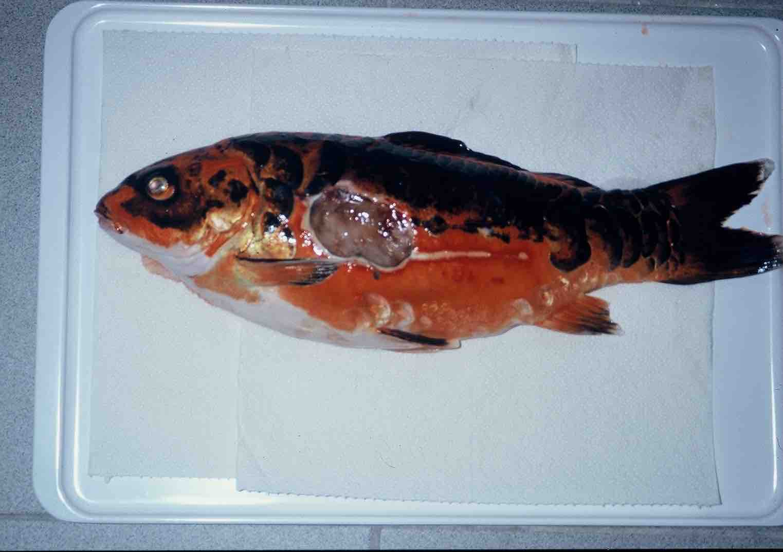 fishcare heizung an heute zeigt die kalte sophie was sie kann. Black Bedroom Furniture Sets. Home Design Ideas