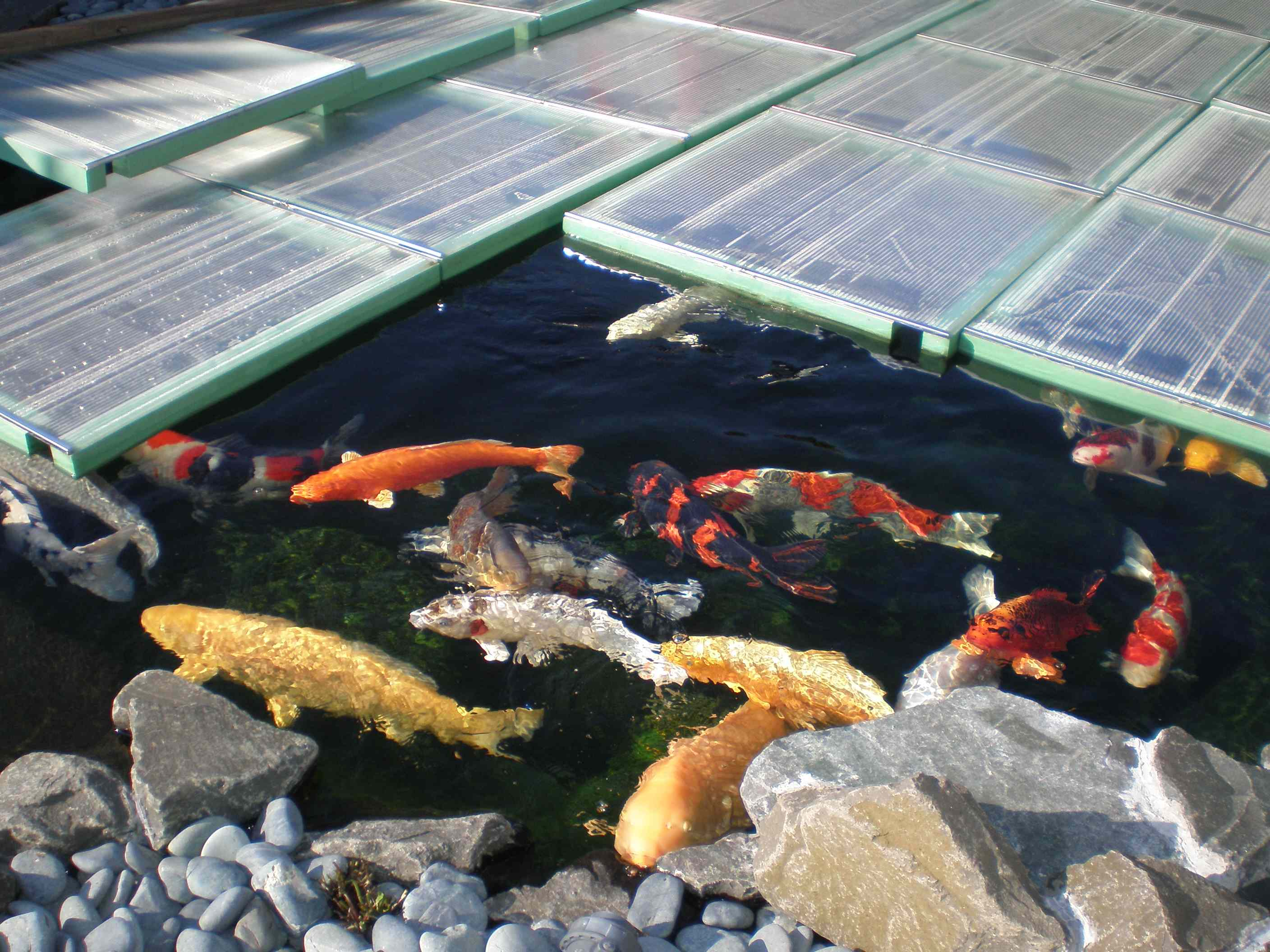Fishcare uv im winter ausschalten for Koi teich winter